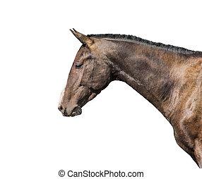 purebred, pferd, freigestellt, weiß, hintergrund.