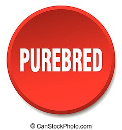 purebred red round flat isolated push button