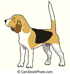 purebred, sabueso, perro