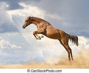 purebred, sauter cheval, jeune