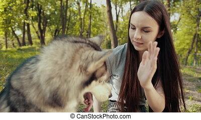 purebred, secousses, jeune, jeu, mains, blond, sibérien, chien, femme, husky, séduisant