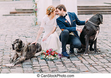 purebred, softly, 坐, 夫婦, 婚禮, 二, 看, 他們, 其他, 腰臀部分, 每一個, 時髦, 狗