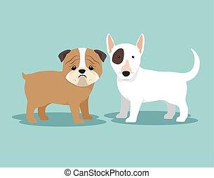 purebred, tervezés, kutyák