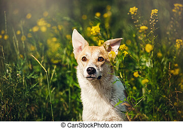 purebred, witte bloemen, dog, rood