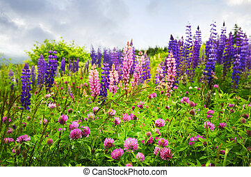 Purple and pink wildflowers - Purple and pink clover and...