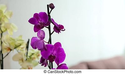 Purple and white orchid close up