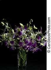 purple and white orchid flowers with black background