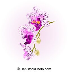 Purple and white orchid stem  flower  vintage vector.eps