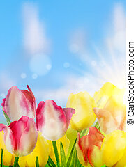 Purple and yellow tulips against the sky. EPS 10