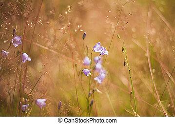 Purple bells growing in the field