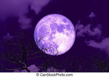 Purple Blue moon back silhouette soft cloud dry branck tree on night sky