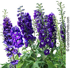 Tall purple flowers many tall purple flowers in the garden tall delphiniums flowers mightylinksfo