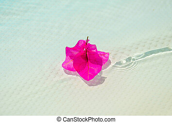 Purple bougainvillea flower at the surface of the pool.