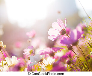 Purple camomile under sunlight