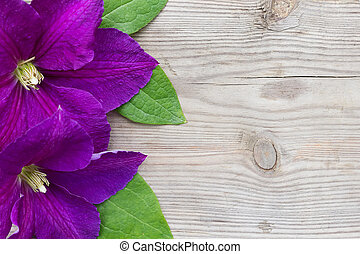 Purple Clematis on wooden background. Floral background