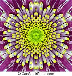 Purple Concentric Flower Center. Mandala Kaleidoscopic...
