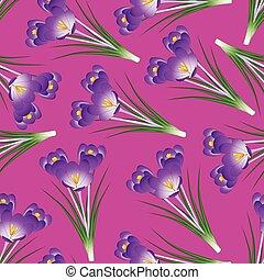 Purple Crocus Flower on Pink Background