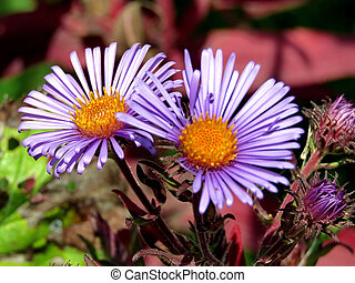 Purple daisies in forest