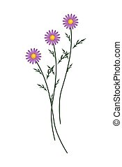 Purple Daisy Blossoms on A White Background