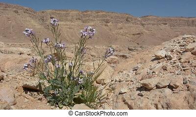 Purple desert flower agains the wild desert landscape