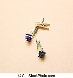 Purple dry flower with wooden clip on pink background