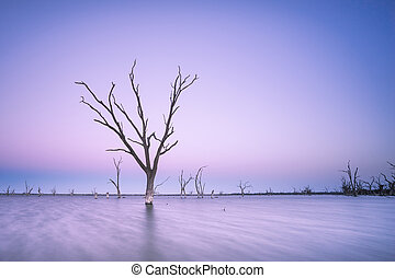 Purple Dusk - Dead tree sits in peaceful lake at sunset