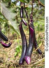 purple eggplant and flower