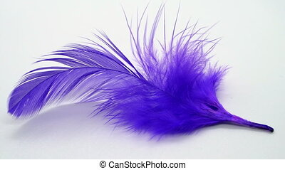 Purple feather in slow motion