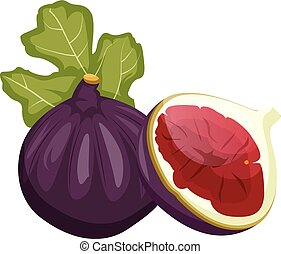 Purple feijola fruit with a green leaf cut in half vector illustration on white background.
