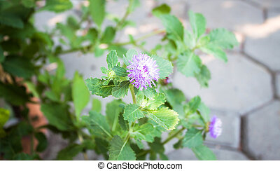 Purple flower branch in small home garden