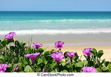 purple flower by the sea