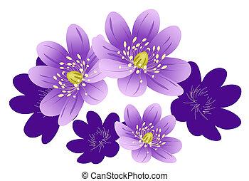 purple flower - illustration drawing of purple flower in...