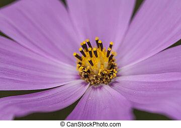purple flower garden close up