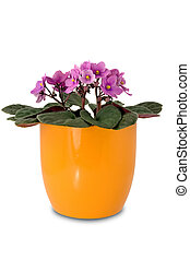 purple flower in a orange pot