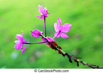 Purple flower in the nature