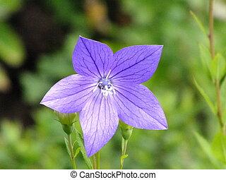 Purple flower on the meadow