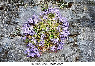 purple flower on the wall