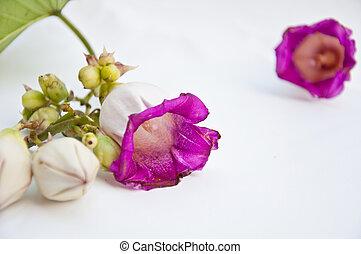 Purple flower on white background