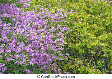 Purple flower with a leaf tree in forest