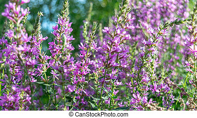 purple flowers against a background of green leaves