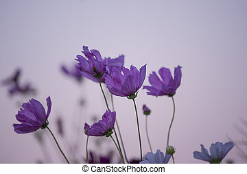 Purple Flowers Against a Pink Sky