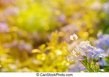 Purple flowers, beautiful natural background, spring