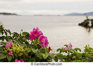 Purple Flowers by the Sea