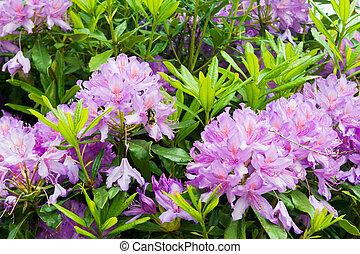 Purple flowers growing in a garden with bee