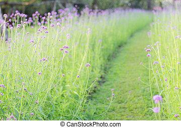 Purple flowers in garden.
