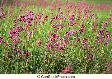 Purple flowers in summer meadow