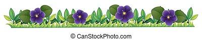 Purple flowers in the bush