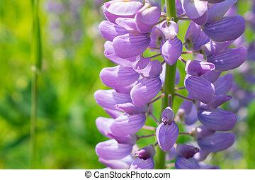 purple flowers in the garden