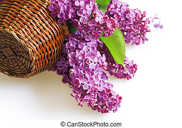 purple flowers of a lilac in basket on a white background