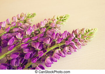 Purple flowers of lythrum on the white wooden background....